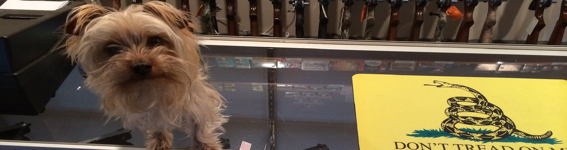 A small dog standing on the front counter of Shawsheen Firearms & Gunsmithing in Billerica, MA